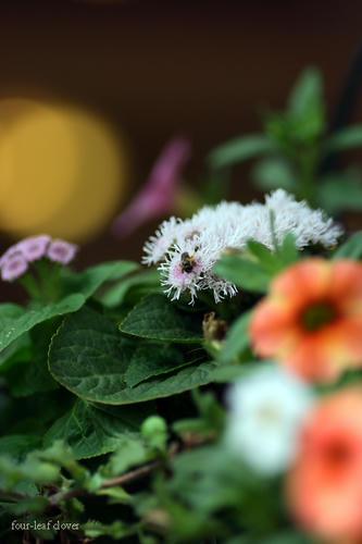 お花が活き活きして・・
