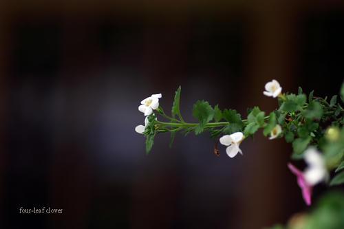 小さなお庭の花