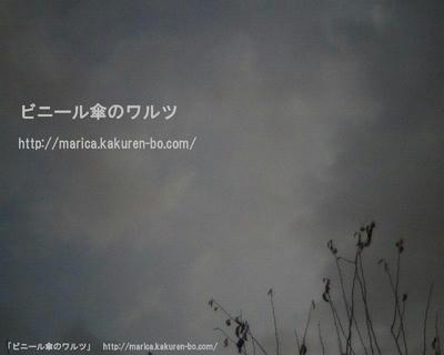 IMG_0012--.JPG