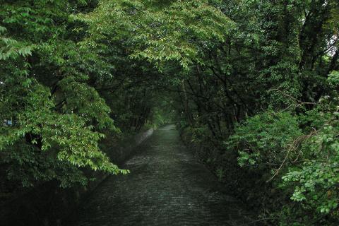 玉川上水の写真
