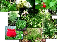 つゆの晴れ間 庭の様子コラージュ