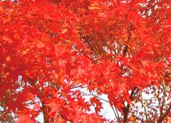 紅葉・蒜山