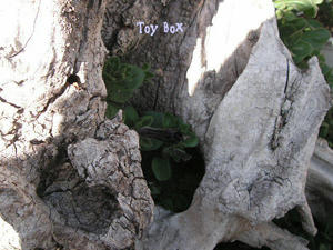 2009410d.jpg