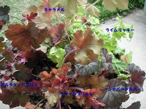 2009427.jpg