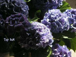 2009512h.jpg