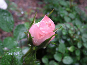 2009514e.jpg