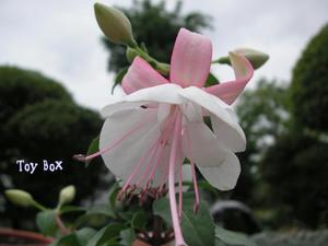 2009516e.jpg