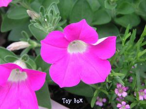 2009517b.jpg