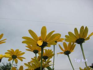 20090711f.jpg