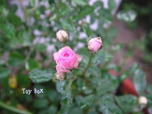 20090715.jpg