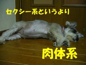 犬の視力1