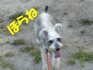 犬の視力3