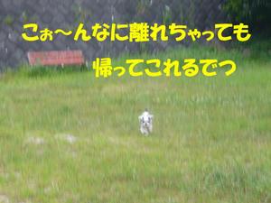犬の視力4