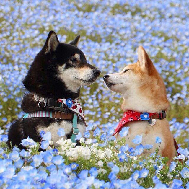相思相愛の 犬