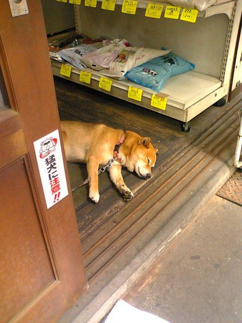 猛犬に注意 イメージ ユーモア