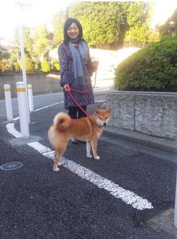 太田裕美と 柴犬小太郎