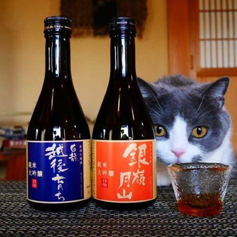 清酒の陰 酒の背後に猫