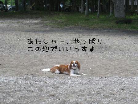 20080706-5.jpg
