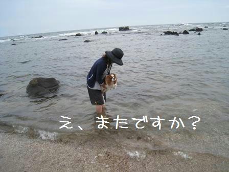yagishiri-6.jpg