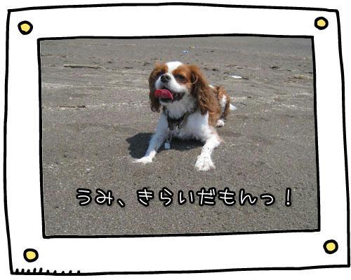 2010-06-28-5.jpg