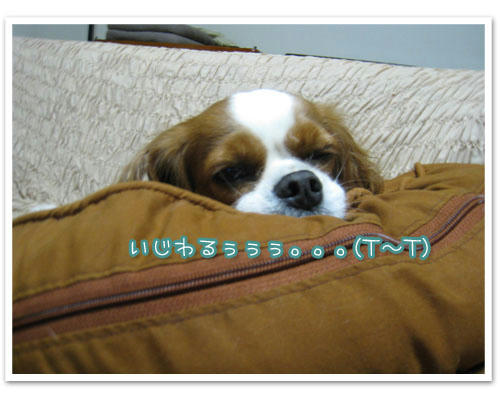 IMG_7688-1.jpg