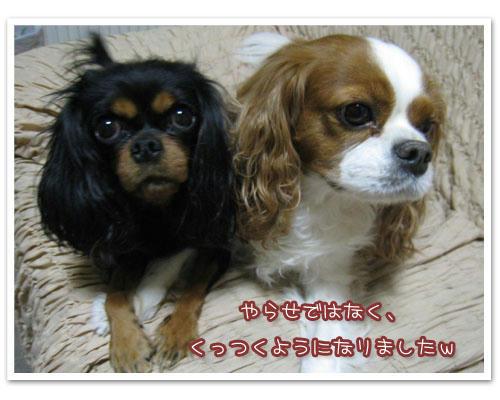 2010-11-12-01.jpg