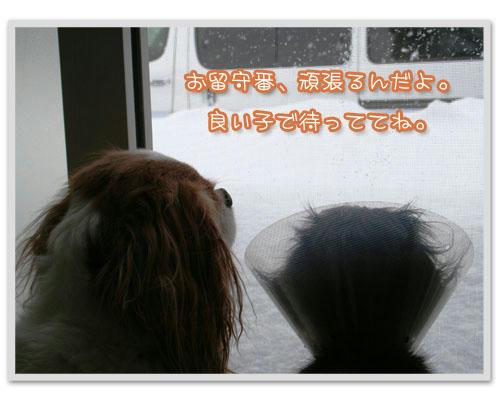 IMG_5988-1.JPG