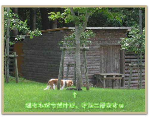 2011-09-10-04.JPG