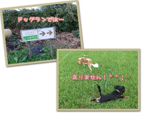 2011-09-10-13.jpg