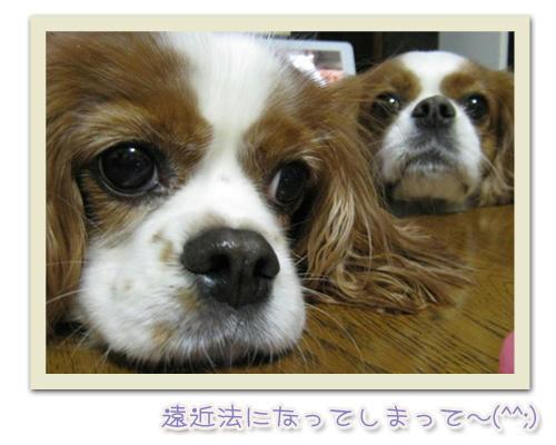 2011-11-27-01.JPG