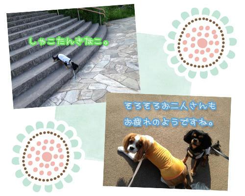 20130610-04.jpg