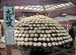 大菊の数咲き