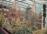 大風景花壇