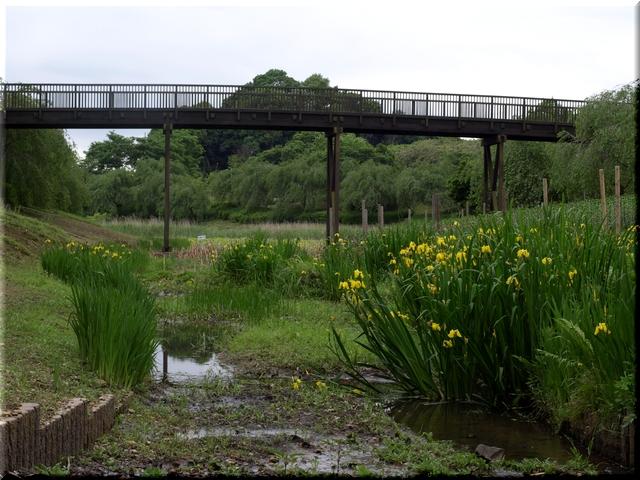 金山池・金龍橋