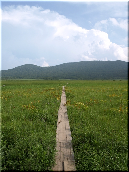 湿原に伸びる木道