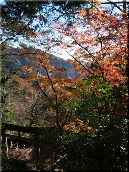 東郷神社から見た山麓