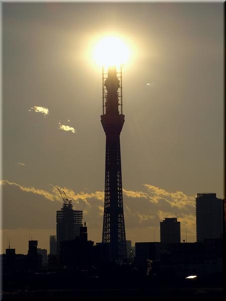東京スカイツリー(10/12/29 撮影)