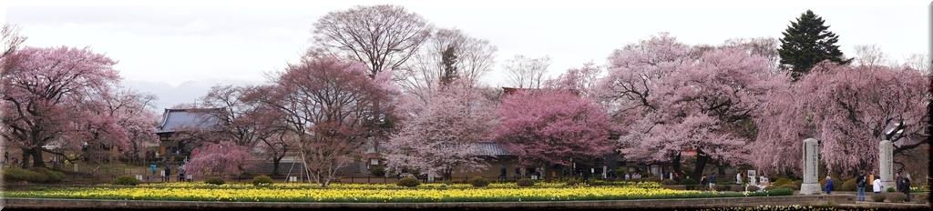 境内を春が彩る