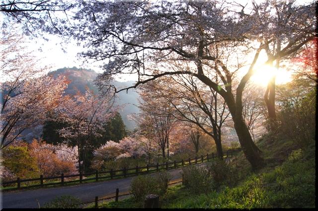 七曲り坂と朝日