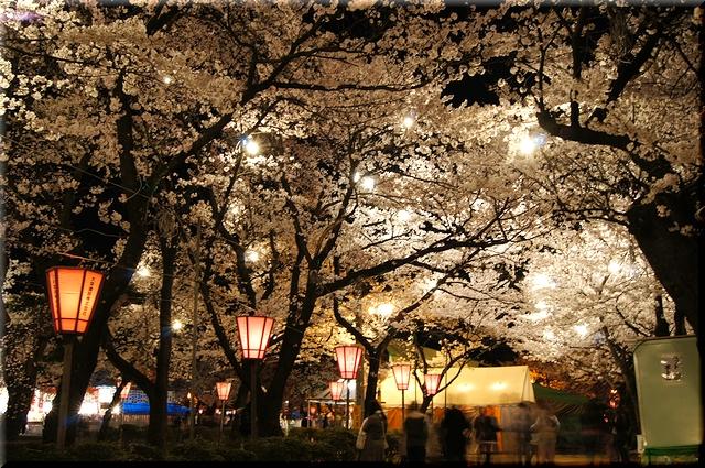 煌めく桜並木