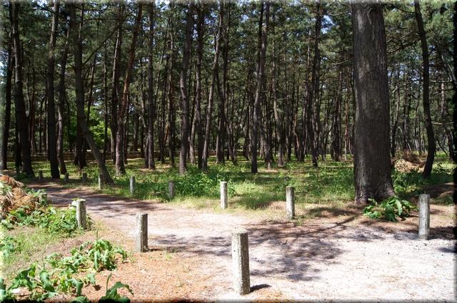 松原の中に続く散策路