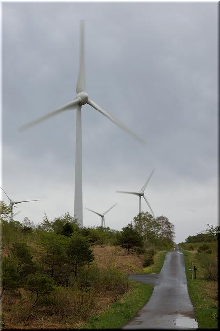 歩道から眺める風車