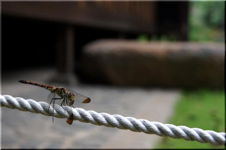 昆虫が苦手な人は拡大要注意