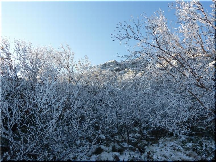陽に輝く凍る木々