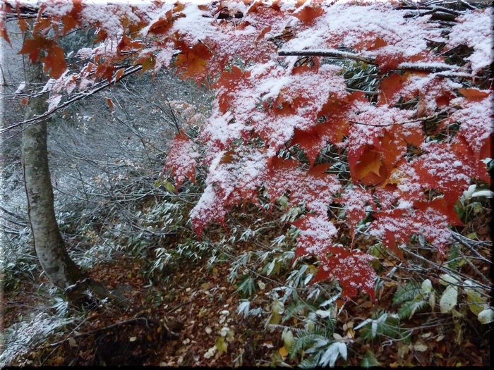 山の秋景色