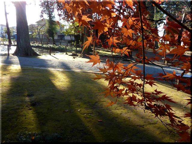 斜陽に照る紅葉