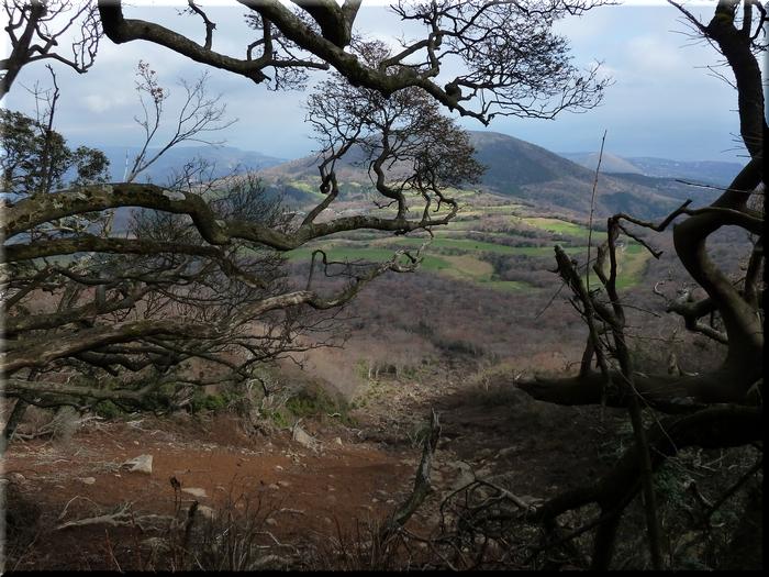 右上の小さな山が大室山