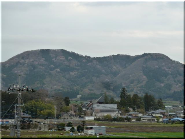 高峯の山桜遠望