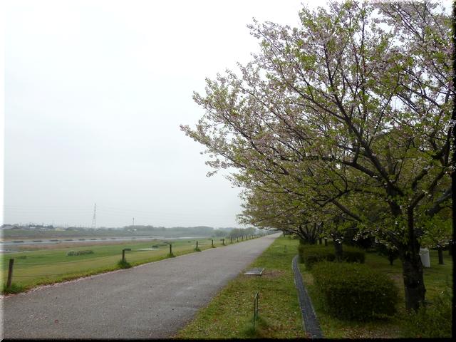 木曽川堤防