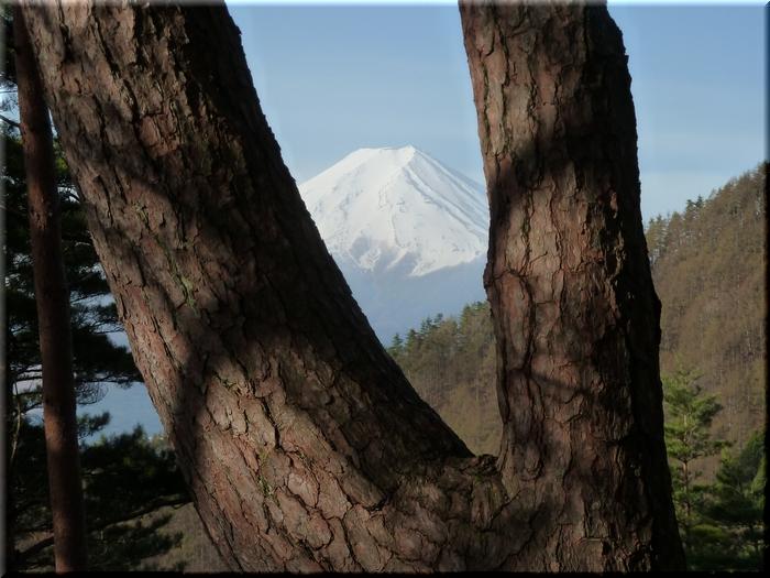 股のぞきから覗く富士山